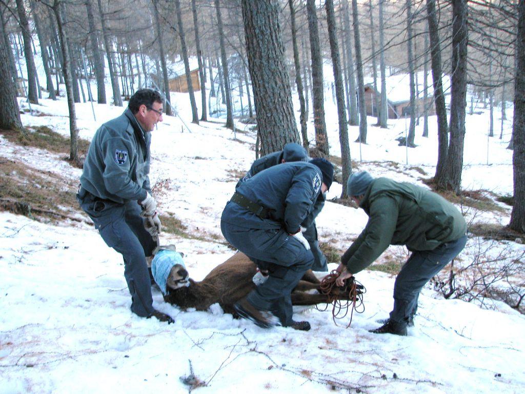 Polizia provinciale contro i bracconieri e per l 39 ambiente lecconotizie il quotidiano on line - Piscina di mozzate ...