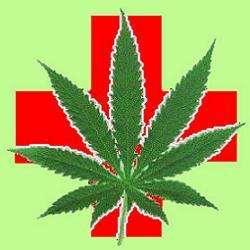 cannabis terapeutica2