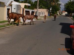 Repubblica Dominicana San Francisco de Macoris (7)