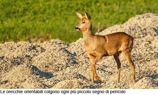 Attimi_Capriolo_10