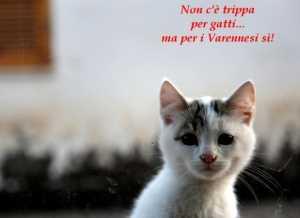 non-trippa-per-gatti